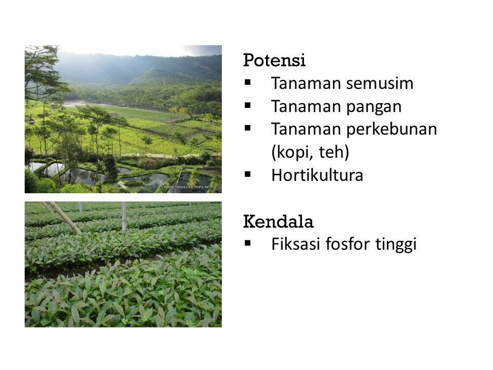 Potensi  Tanaman semusim  Tanaman pangan  Tanaman perkebunan (kopi, teh)  Hortikultura Kendala  Fiksasi fosfor tinggi
