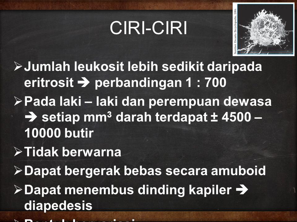 CIRI-CIRI  Jumlah leukosit lebih sedikit daripada eritrosit  perbandingan 1 : 700  Pada laki – laki dan perempuan dewasa  setiap mm 3 darah terdapat ± 4500 – 10000 butir  Tidak berwarna  Dapat bergerak bebas secara amuboid  Dapat menembus dinding kapiler  diapedesis  Bentuk bervariasi