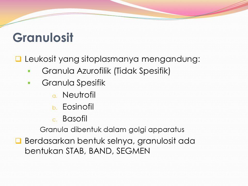 Granulosit  Leukosit yang sitoplasmanya mengandung:  Granula Azurofilik (Tidak Spesifik)  Granula Spesifik a. Neutrofil b. Eosinofil c. Basofil Gra