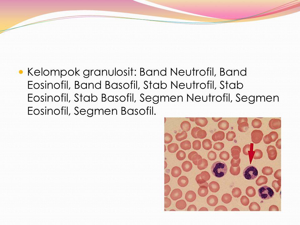 Kelompok granulosit: Band Neutrofil, Band Eosinofil, Band Basofil, Stab Neutrofil, Stab Eosinofil, Stab Basofil, Segmen Neutrofil, Segmen Eosinofil, S