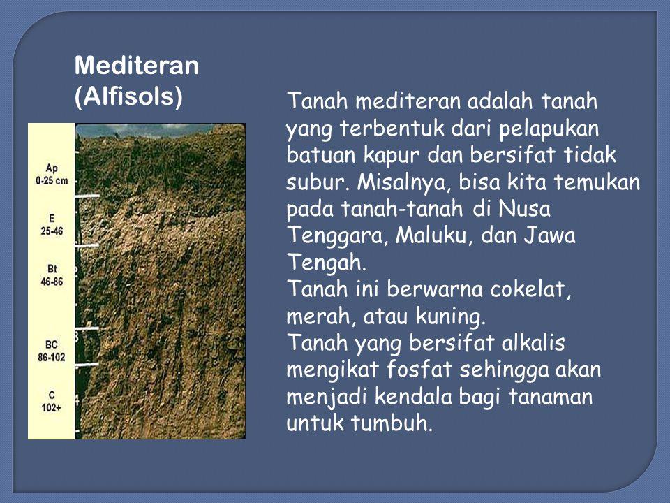 Tanah mediteran adalah tanah yang terbentuk dari pelapukan batuan kapur dan bersifat tidak subur.