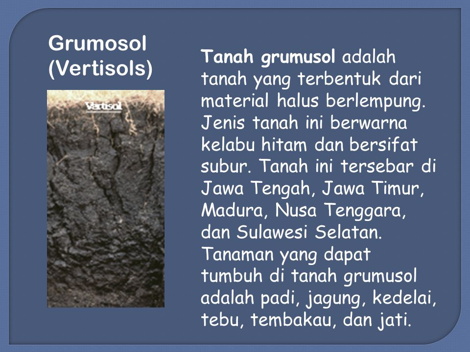 Grumosol (Vertisols) Tanah grumusol adalah tanah yang terbentuk dari material halus berlempung.