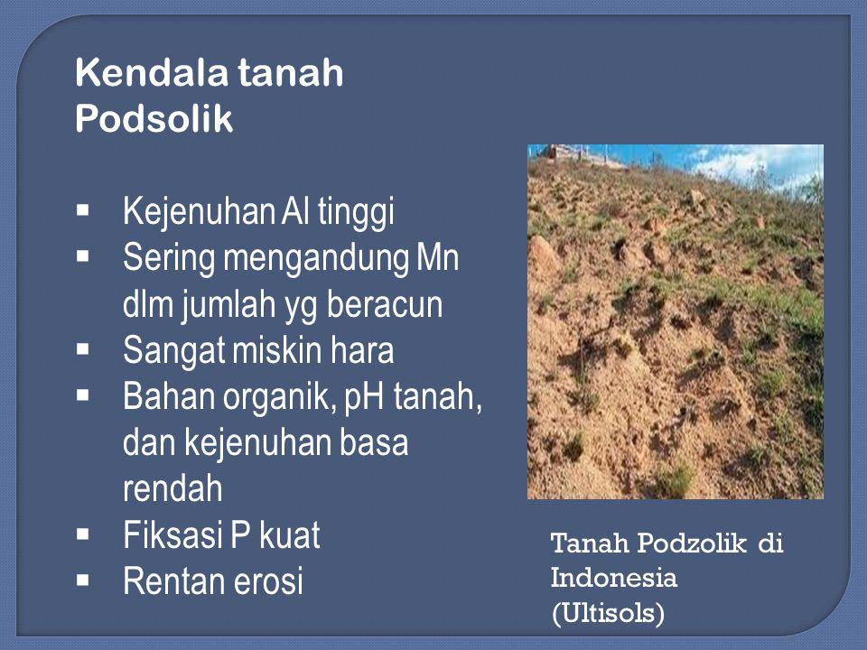 Kendala tanah Podsolik  Kejenuhan Al tinggi  Sering mengandung Mn dlm jumlah yg beracun  Sangat miskin hara  Bahan organik, pH tanah, dan kejenuha