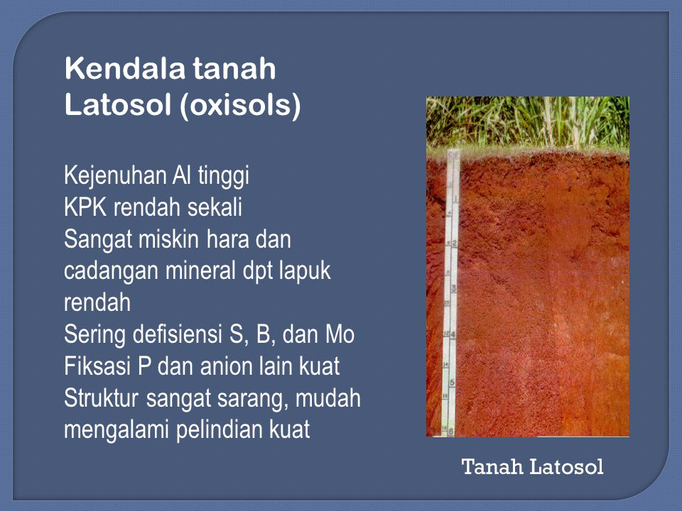 Kendala tanah Latosol (oxisols) Kejenuhan Al tinggi KPK rendah sekali Sangat miskin hara dan cadangan mineral dpt lapuk rendah Sering defisiensi S, B, dan Mo Fiksasi P dan anion lain kuat Struktur sangat sarang, mudah mengalami pelindian kuat Tanah Latosol