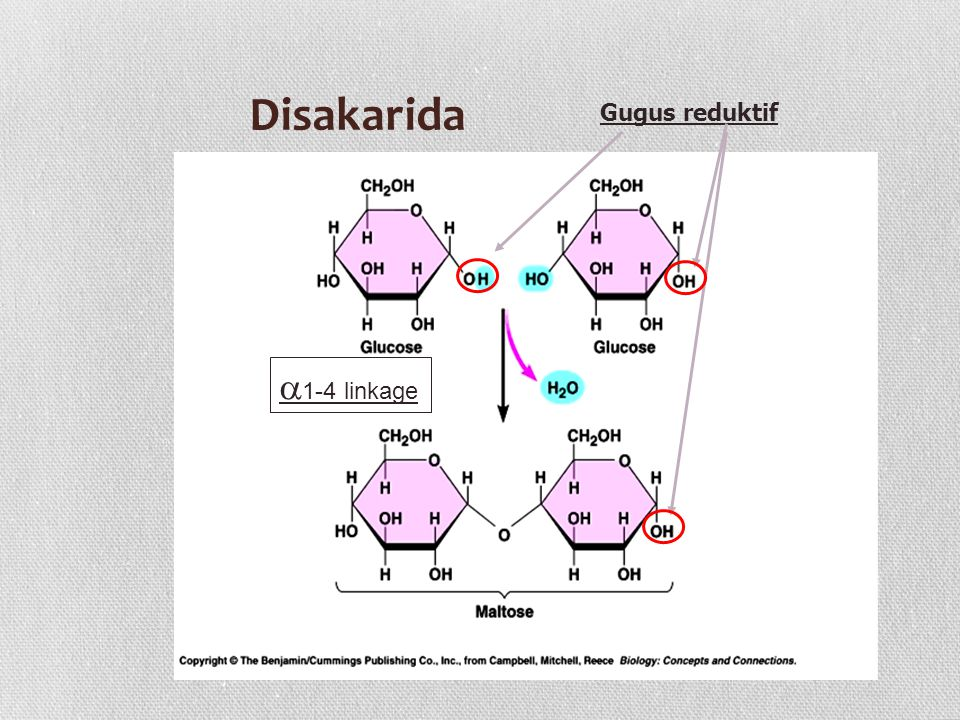 Disakarida  1-4 linkage Gugus reduktif