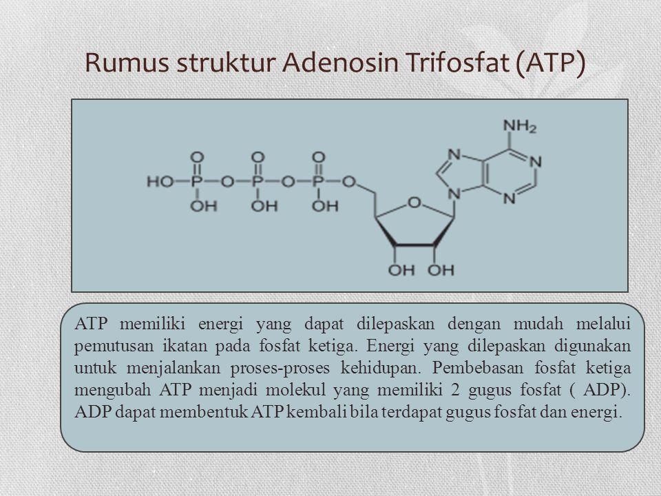 Rumus struktur Adenosin Trifosfat (ATP) ATP memiliki energi yang dapat dilepaskan dengan mudah melalui pemutusan ikatan pada fosfat ketiga.