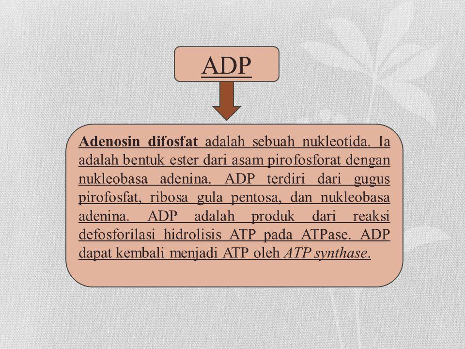 ADP Adenosin difosfat adalah sebuah nukleotida.
