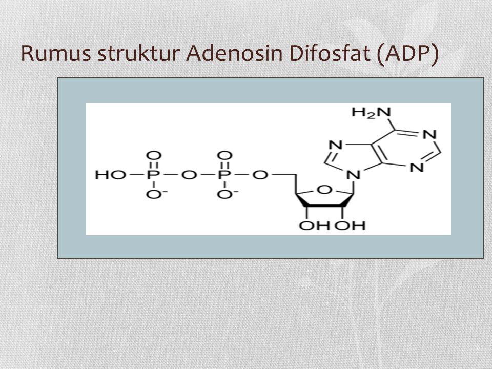 Rumus struktur Adenosin Difosfat (ADP)