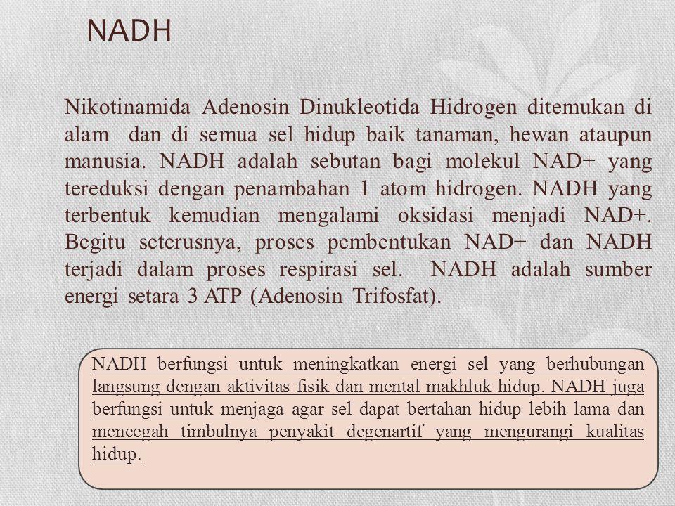 NADH Nikotinamida Adenosin Dinukleotida Hidrogen ditemukan di alam dan di semua sel hidup baik tanaman, hewan ataupun manusia.