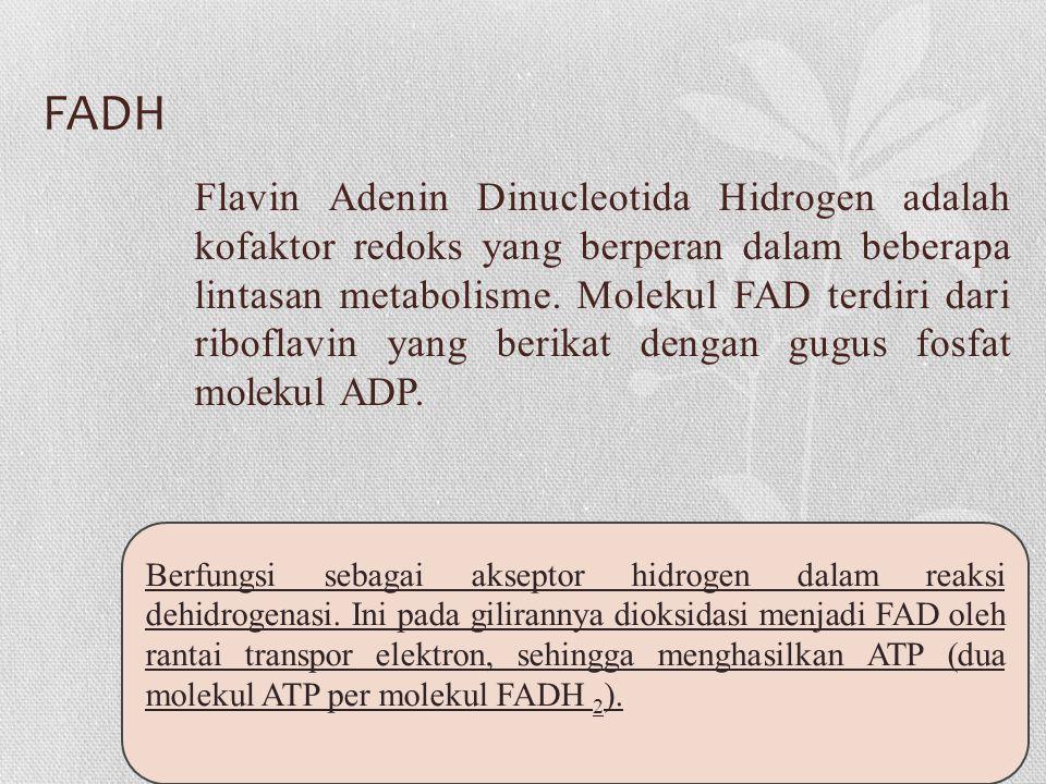 FADH Flavin Adenin Dinucleotida Hidrogen adalah kofaktor redoks yang berperan dalam beberapa lintasan metabolisme.