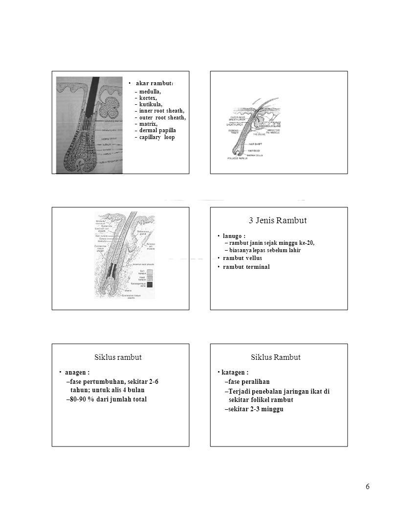 7 Siklus Rambut telogen : –fase istirahat setelah terjadi pelepasan rambut (eksogen) –setiap hari sekitar 50-100 helai rambut terlepas (1 % dari jumlah total) –Perbandingan fase anagen : telogen = 9 : 1 PERSARAFAN KULIT ujung2 saraf sensoris berakhir di dermis dan epidermis saraf otonom melayani pembuluh darah, kelenjar keringat dan otot arrector pili secara dermatomal.
