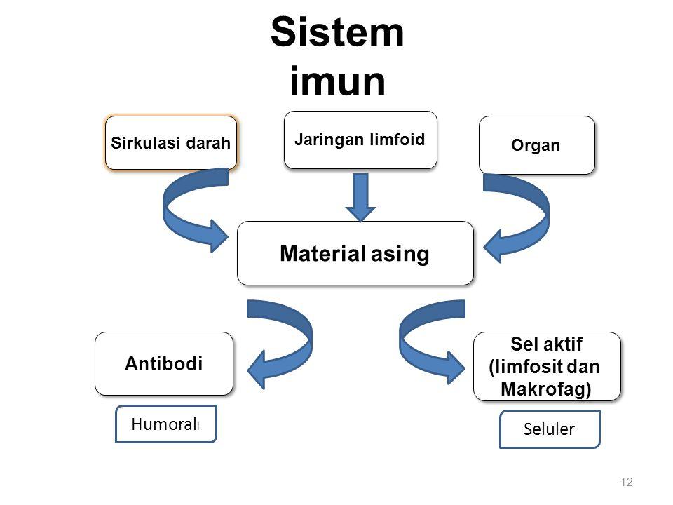 Sistem imun 12 Sirkulasi darah Jaringan limfoid Organ Sel aktif (limfosit dan Makrofag) Sel aktif (limfosit dan Makrofag) Antibodi Material asing Humo