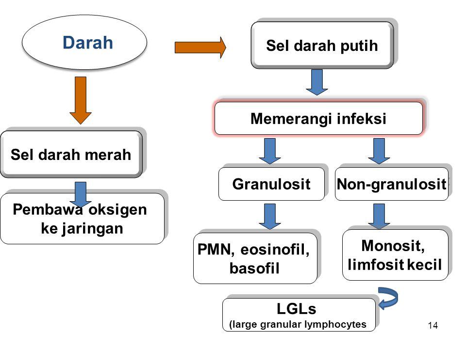 14 Darah Pembawa oksigen ke jaringan Pembawa oksigen ke jaringan Memerangi infeksi Sel darah putih Granulosit Sel darah merah Non-granulosit PMN, eosi