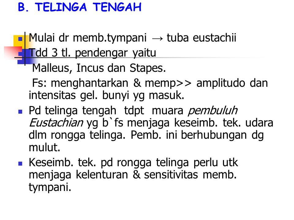B. TELINGA TENGAH Mulai dr memb.tympani → tuba eustachii Tdd 3 tl.