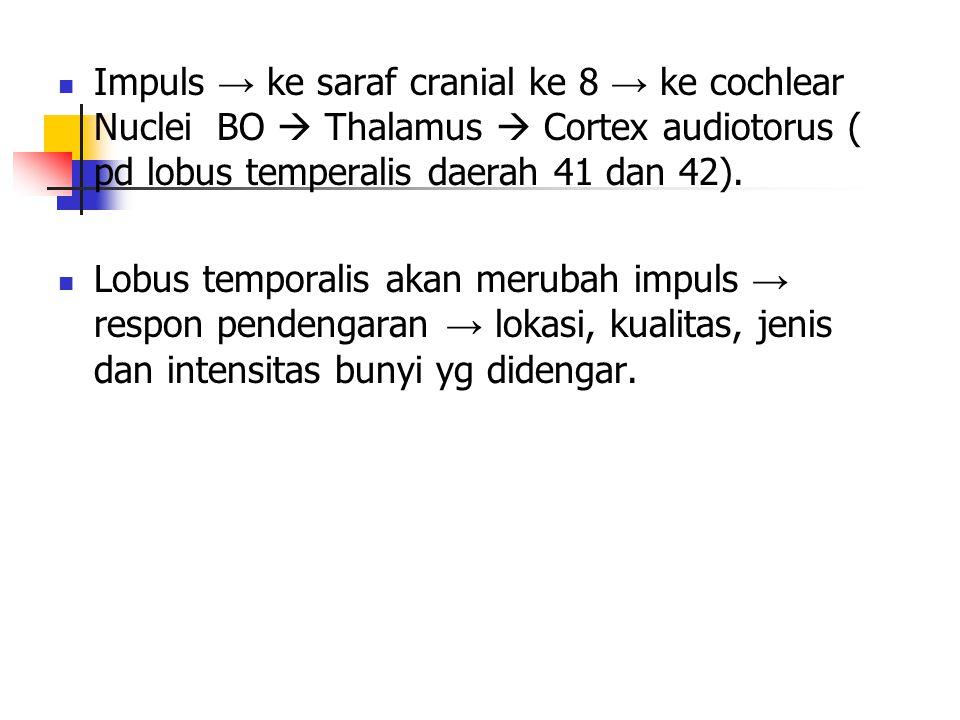 Impuls → ke saraf cranial ke 8 → ke cochlear Nuclei BO  Thalamus  Cortex audiotorus ( pd lobus temperalis daerah 41 dan 42).