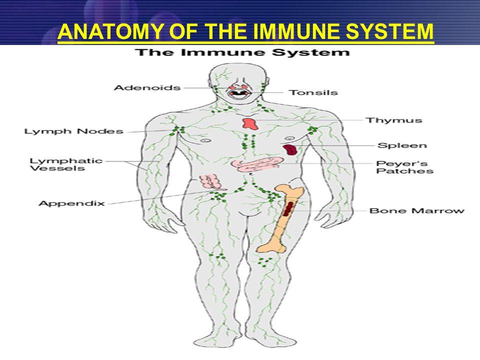 33 ANTIGEN -Bakteri -Virus -Parasit -Zat-zat asing -Dll TERPAPAR (PAPARAN) (EXOGEN) FISIK TERMIS MEKANIS RADIASI PSIKIS STATUS NUTRISI R.I.S  R.I.H KELEMAHAN UMUM INAKTIVITAS DLL ALERGEN IMUNOGEN R.I.