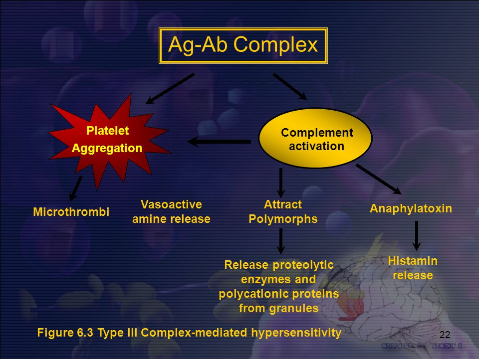 22 Ag-Ab Complex Platelet Aggregation Complement activation Microthrombi Vasoactive amine release Attract Polymorphs Anaphylatoxin Release proteolytic enzymes and polycationic proteins from granules Histamin release Figure 6.3 Type III Complex-mediated hypersensitivity