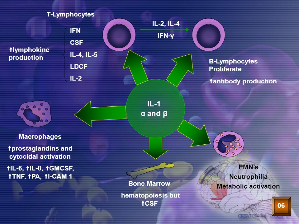 38 IL-1 α and β Macrophages  prostaglandins and cytocidal activation  IL-6,  IL-8,  GMCSF,  TNF,  PA,  I-CAM 1 Bone Marrow hematopoiesis but 