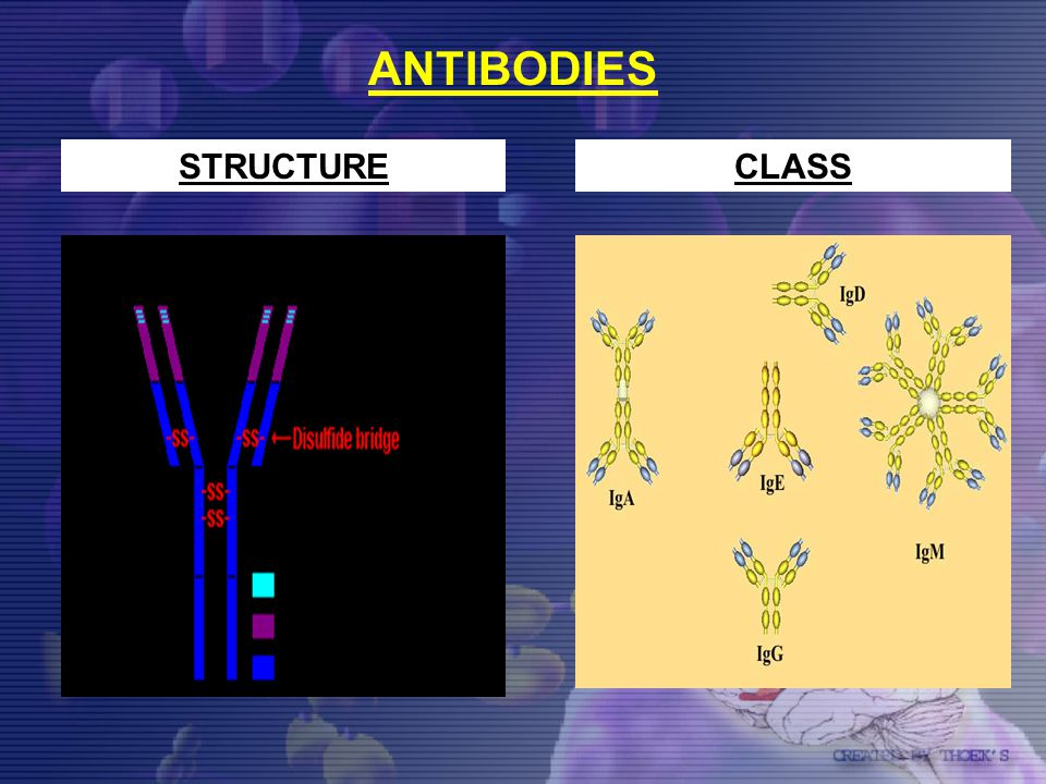 ANTIBODIES STRUCTURECLASS