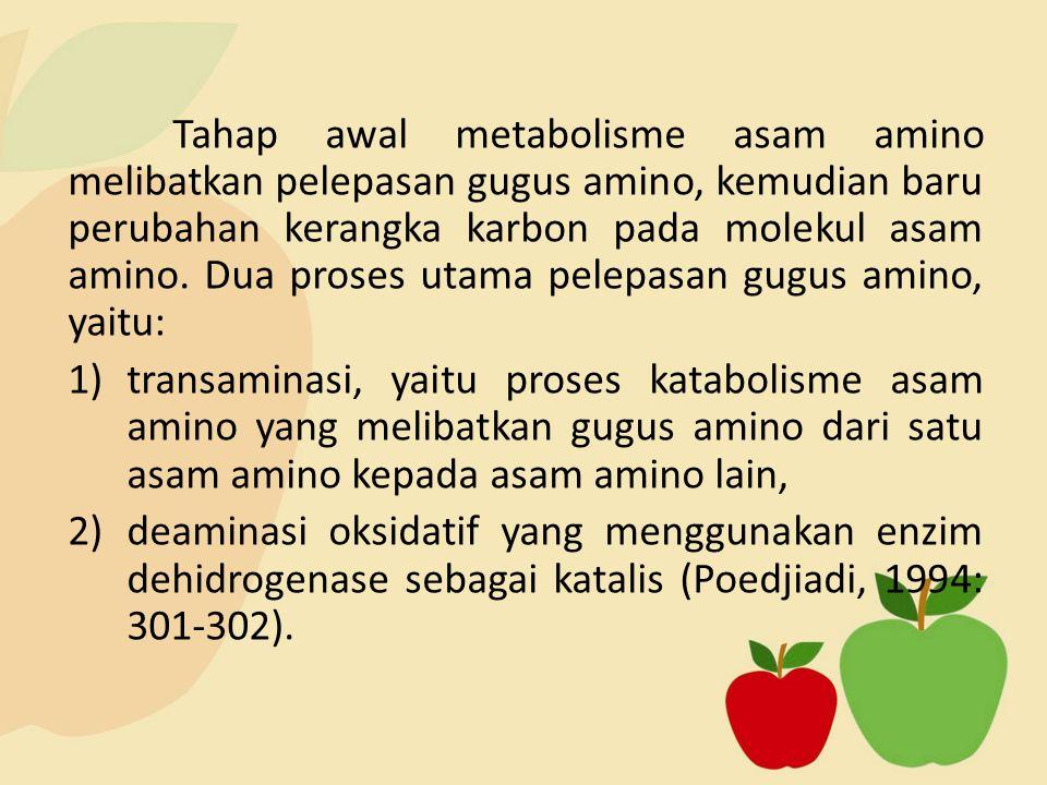 Tahap awal metabolisme asam amino melibatkan pelepasan gugus amino, kemudian baru perubahan kerangka karbon pada molekul asam amino. Dua proses utama