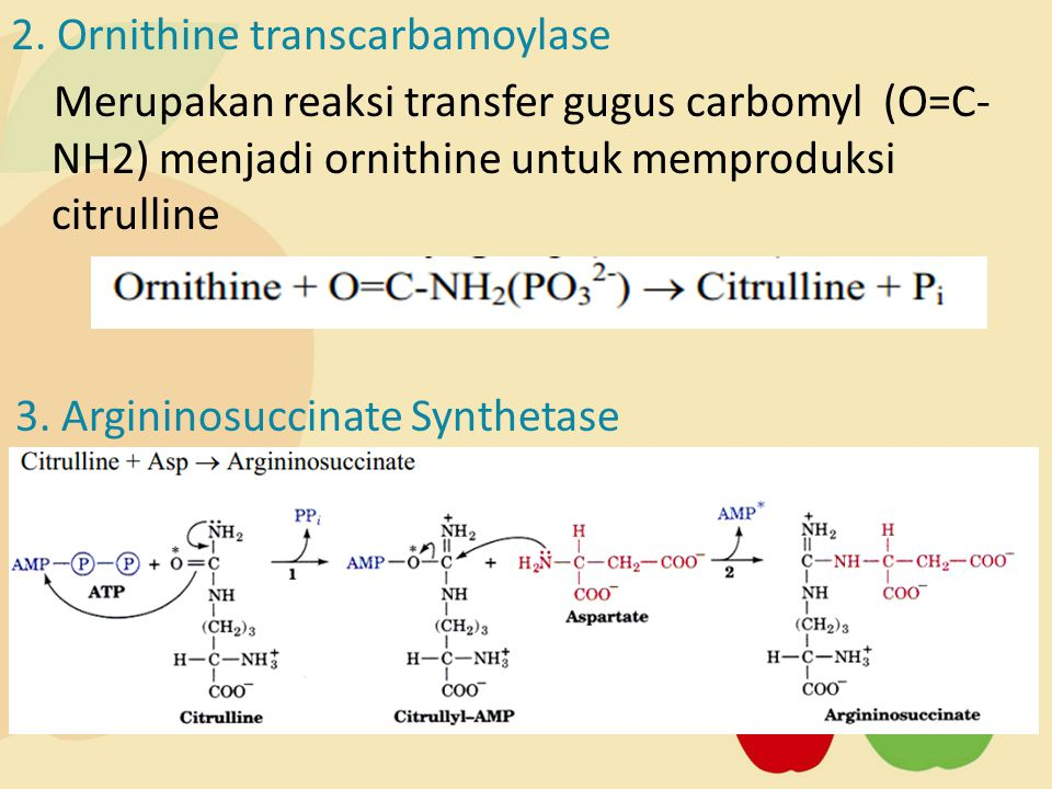 2. Ornithine transcarbamoylase Merupakan reaksi transfer gugus carbomyl (O=C- NH2) menjadi ornithine untuk memproduksi citrulline 3. Argininosuccinate