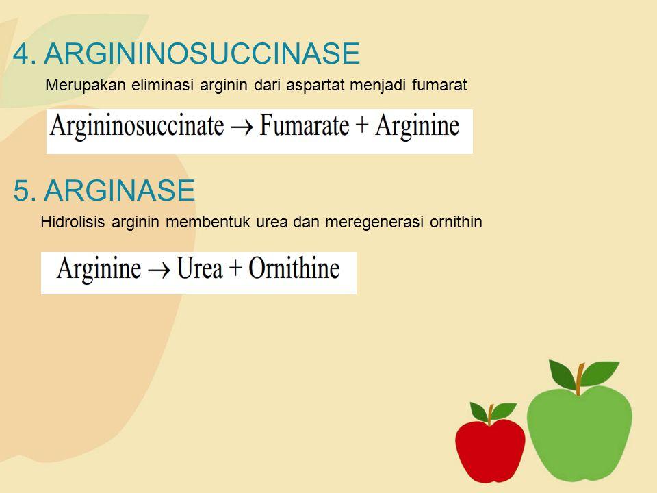 4. ARGININOSUCCINASE Merupakan eliminasi arginin dari aspartat menjadi fumarat 5. ARGINASE Hidrolisis arginin membentuk urea dan meregenerasi ornithin