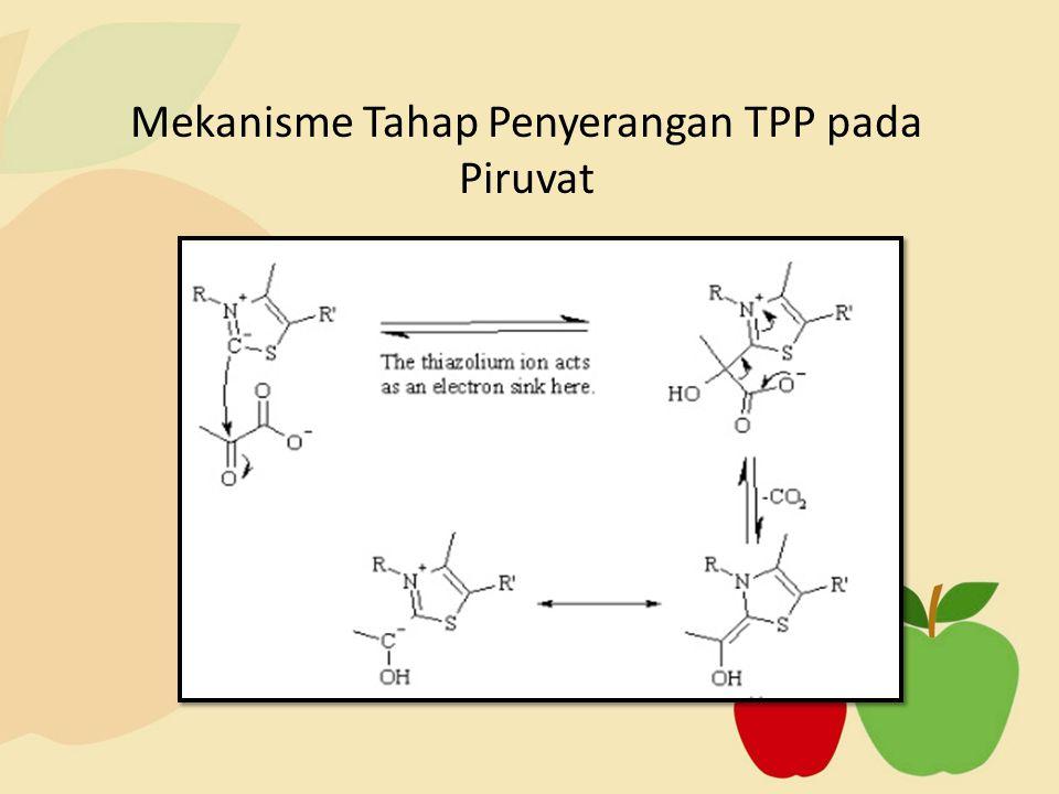 Mekanisme Tahap Penyerangan TPP pada Piruvat