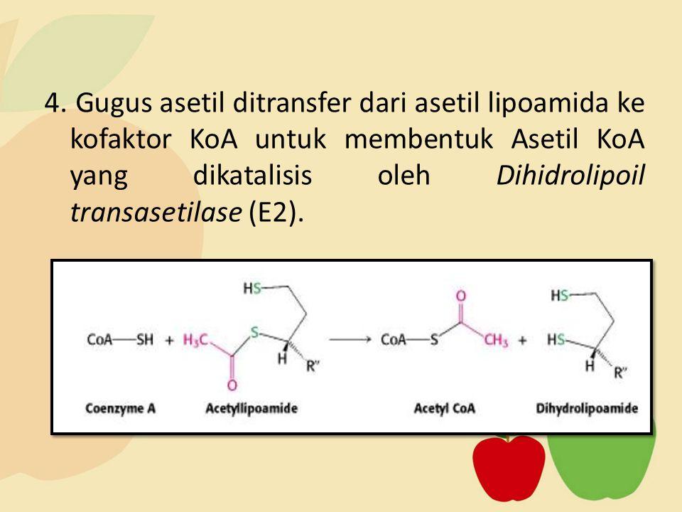 4. Gugus asetil ditransfer dari asetil lipoamida ke kofaktor KoA untuk membentuk Asetil KoA yang dikatalisis oleh Dihidrolipoil transasetilase (E2).
