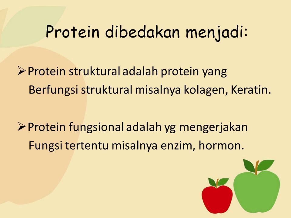 Protein dibedakan menjadi:  Protein struktural adalah protein yang Berfungsi struktural misalnya kolagen, Keratin.  Protein fungsional adalah yg men