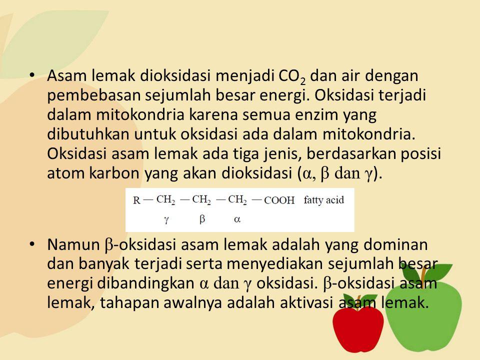 Asam lemak dioksidasi menjadi CO 2 dan air dengan pembebasan sejumlah besar energi. Oksidasi terjadi dalam mitokondria karena semua enzim yang dibutuh