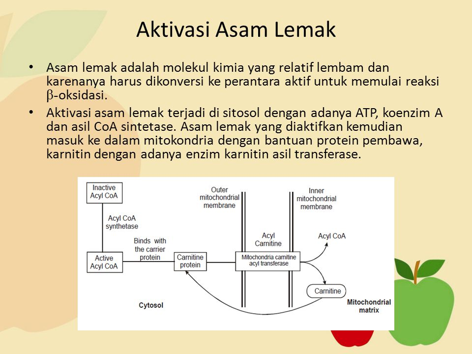 Asam lemak adalah molekul kimia yang relatif lembam dan karenanya harus dikonversi ke perantara aktif untuk memulai reaksi β- oksidasi. Aktivasi asam
