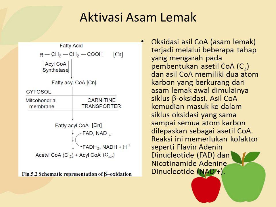Oksidasi asil CoA (asam lemak) terjadi melalui beberapa tahap yang mengarah pada pembentukan asetil CoA (C 2 ) dan asil CoA memiliki dua atom karbon yang berkurang dari asam lemak awal dimulainya siklus β -oksidasi.