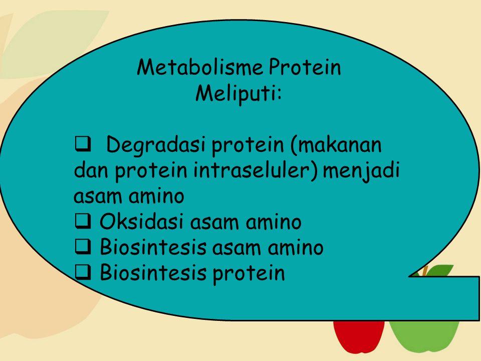Metabolisme Protein Meliputi:  Degradasi protein (makanan dan protein intraseluler) menjadi asam amino  Oksidasi asam amino  Biosintesis asam amino