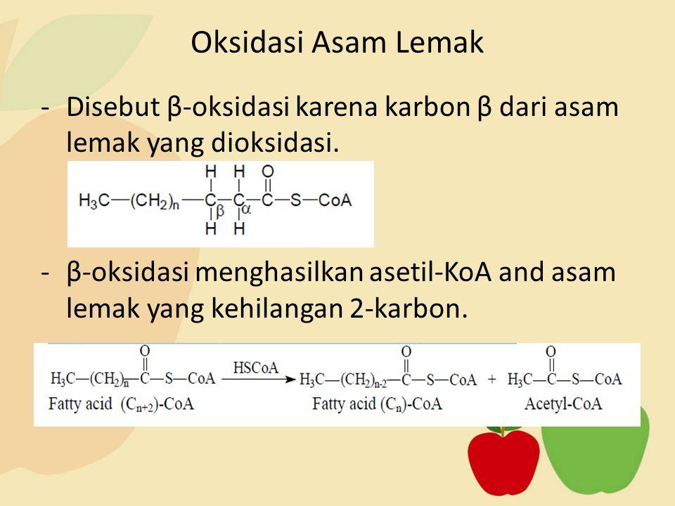 -Disebut β-oksidasi karena karbon β dari asam lemak yang dioksidasi. -β-oksidasi menghasilkan asetil-KoA and asam lemak yang kehilangan 2-karbon. Oksi