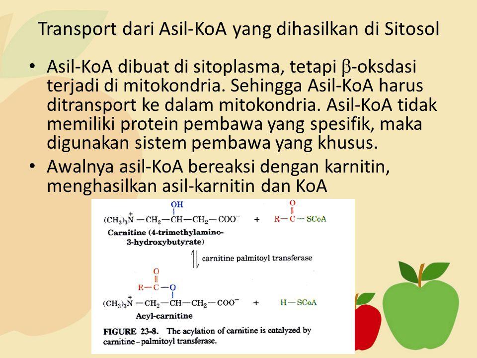 Asil-KoA dibuat di sitoplasma, tetapi β -oksdasi terjadi di mitokondria. Sehingga Asil-KoA harus ditransport ke dalam mitokondria. Asil-KoA tidak memi