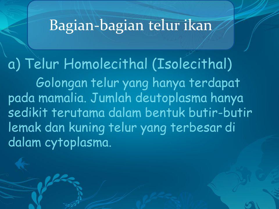a) Telur Homolecithal (Isolecithal) Golongan telur yang hanya terdapat pada mamalia. Jumlah deutoplasma hanya sedikit terutama dalam bentuk butir-buti