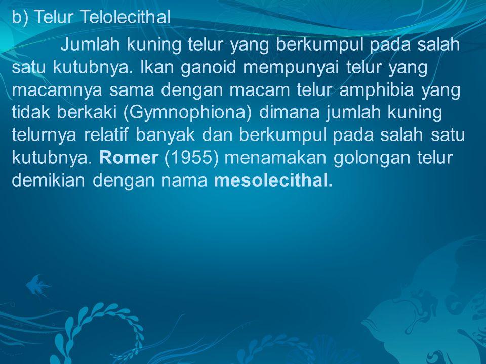 b) Telur Telolecithal Jumlah kuning telur yang berkumpul pada salah satu kutubnya. Ikan ganoid mempunyai telur yang macamnya sama dengan macam telur a