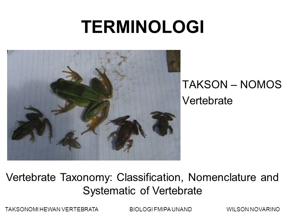 TERMINOLOGI TAKSON – NOMOS Vertebrate Vertebrate Taxonomy: Classification, Nomenclature and Systematic of Vertebrate TAKSONOMI HEWAN VERTEBRATA BIOLOG