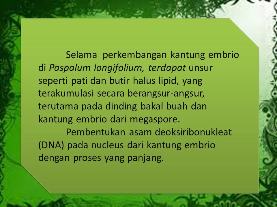 Selama perkembangan kantung embrio di Paspalum longifolium, terdapat unsur seperti pati dan butir halus lipid, yang terakumulasi secara berangsur-angsur, terutama pada dinding bakal buah dan kantung embrio dari megaspore.