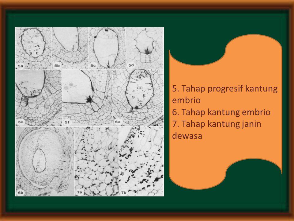 5. Tahap progresif kantung embrio 6. Tahap kantung embrio 7. Tahap kantung janin dewasa