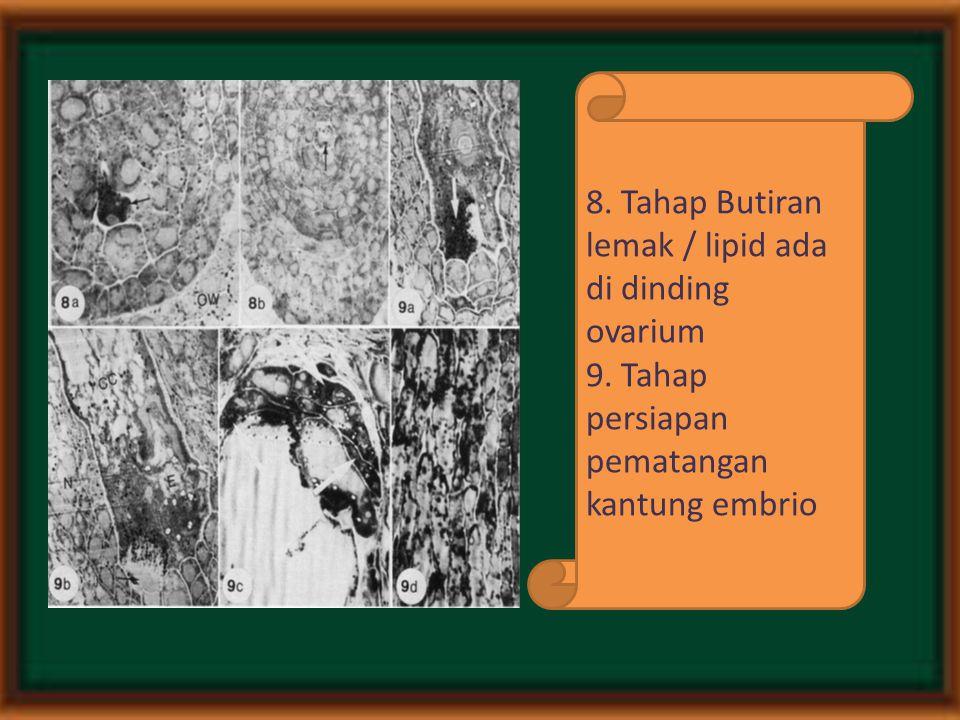 8. Tahap Butiran lemak / lipid ada di dinding ovarium 9. Tahap persiapan pematangan kantung embrio