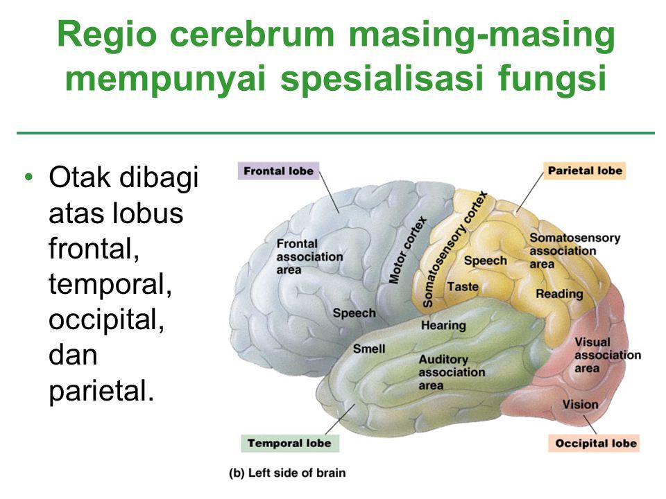 Otak dibagi atas lobus frontal, temporal, occipital, dan parietal. Regio cerebrum masing-masing mempunyai spesialisasi fungsi