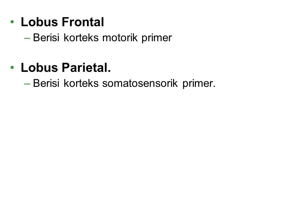 Lobus Frontal –Berisi korteks motorik primer Lobus Parietal. –Berisi korteks somatosensorik primer.