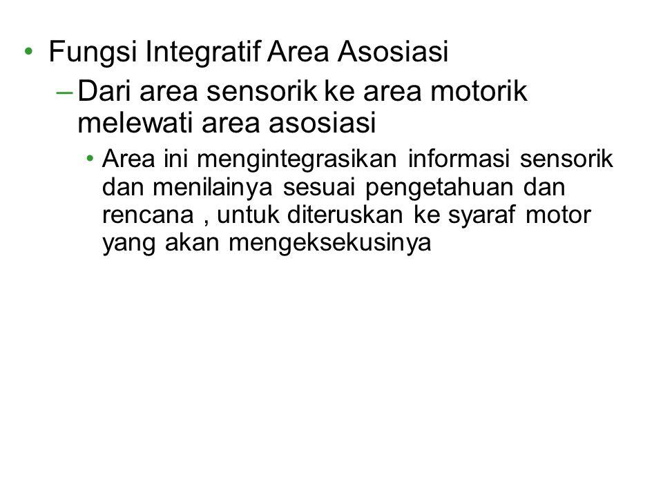 Fungsi Integratif Area Asosiasi –Dari area sensorik ke area motorik melewati area asosiasi Area ini mengintegrasikan informasi sensorik dan menilainya