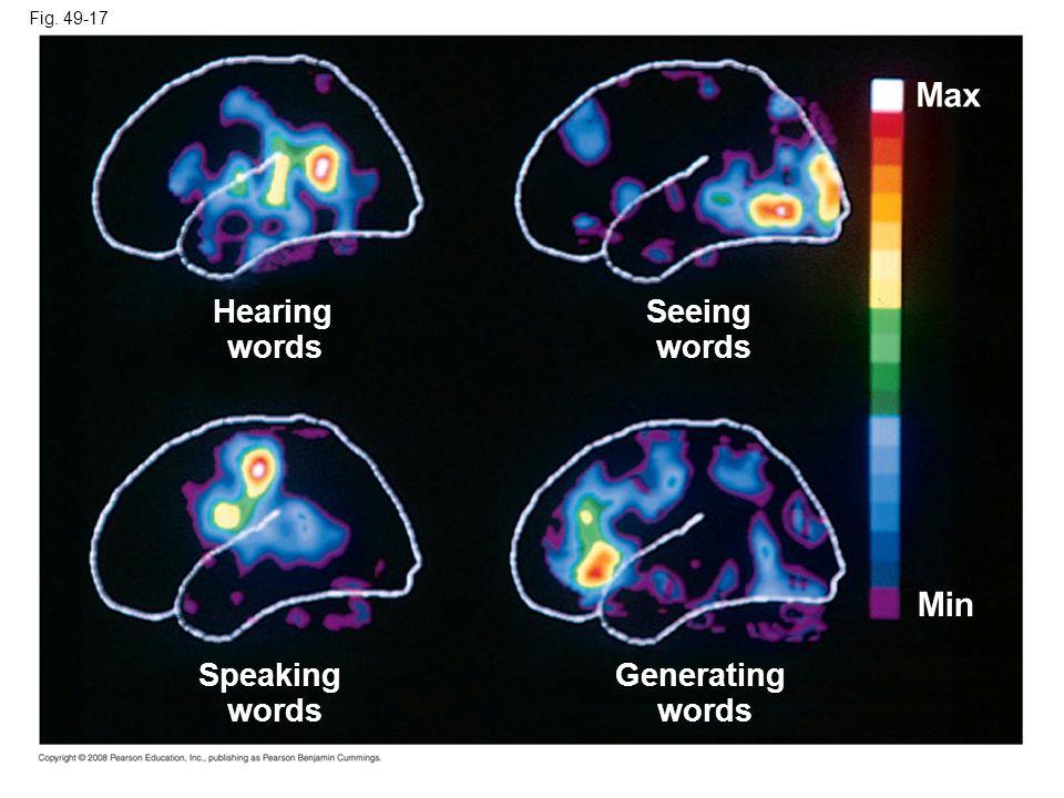 Fig. 49-17 Generating words Max Speaking words Hearing words Seeing words Min