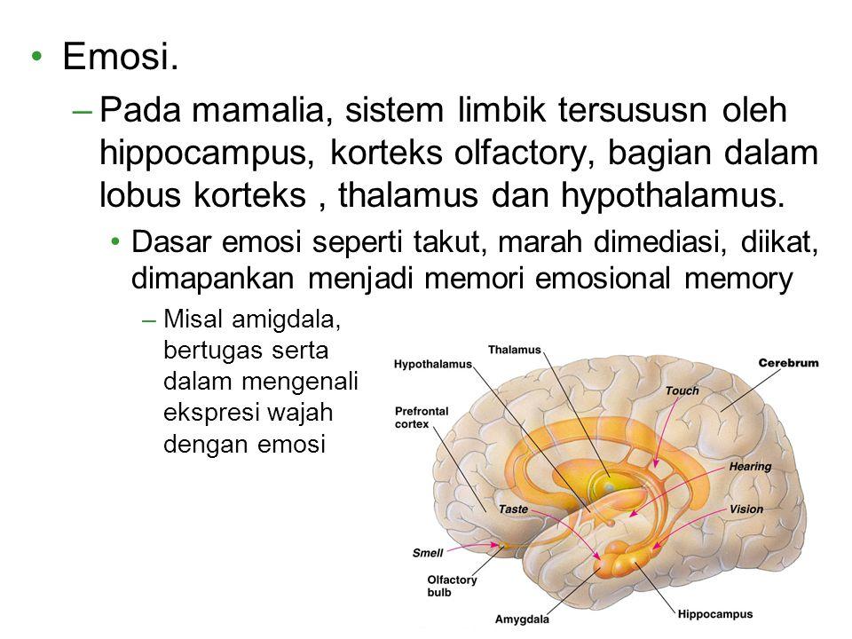 Emosi. –Pada mamalia, sistem limbik tersususn oleh hippocampus, korteks olfactory, bagian dalam lobus korteks, thalamus dan hypothalamus. Dasar emosi