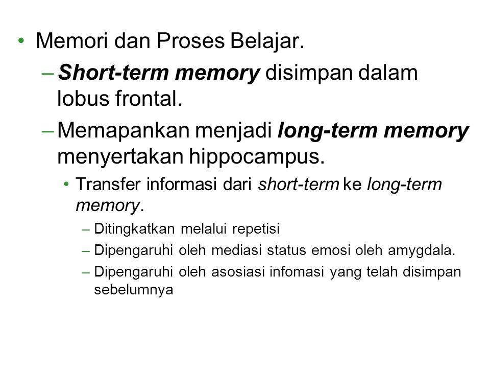 Memori dan Proses Belajar. –Short-term memory disimpan dalam lobus frontal. –Memapankan menjadi long-term memory menyertakan hippocampus. Transfer inf