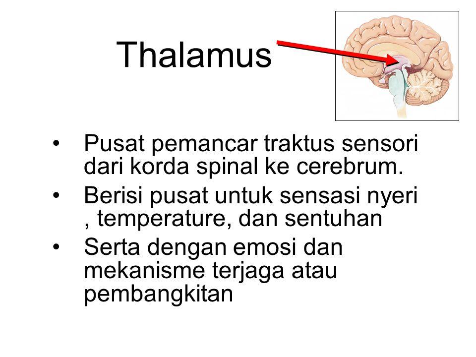 Thalamus Pusat pemancar traktus sensori dari korda spinal ke cerebrum. Berisi pusat untuk sensasi nyeri, temperature, dan sentuhan Serta dengan emosi