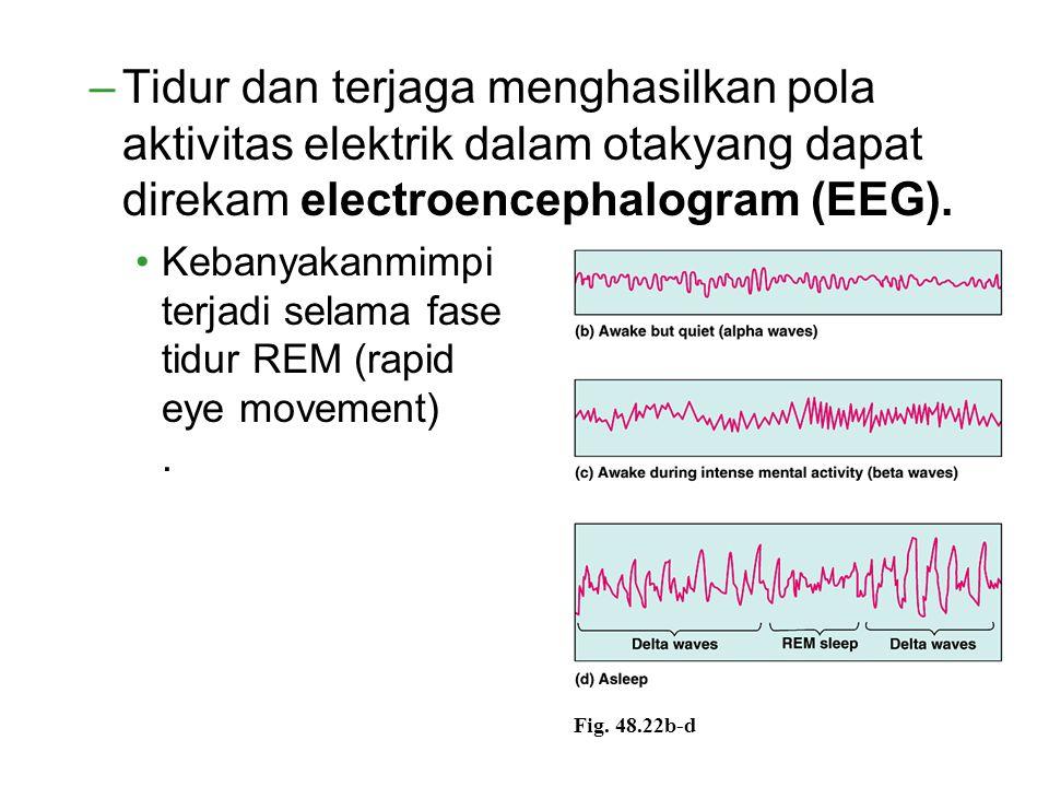 –Tidur dan terjaga menghasilkan pola aktivitas elektrik dalam otakyang dapat direkam electroencephalogram (EEG). Kebanyakanmimpi terjadi selama fase t