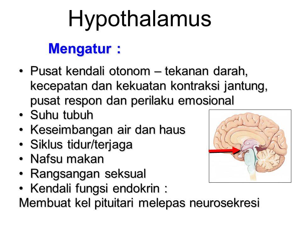 Hypothalamus Pusat kendali otonom – tekanan darah, kecepatan dan kekuatan kontraksi jantung, pusat respon dan perilaku emosionalPusat kendali otonom –